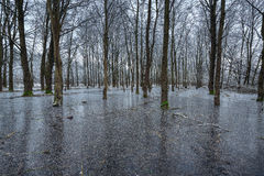 Winter trees in the frozen water. Royalty Free Stock Images