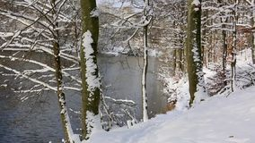 Winter trees in germany forest. Winter trees in germany forest and lake. White snow stock video
