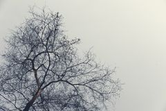 Winter trees without green leaves in the sad evening. Royalty Free Stock Images