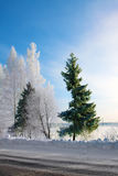 Winter,  trees in hoar-frost Stock Photos