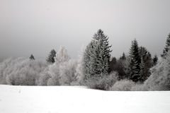 Winter trees with hoarfrost-2. Winter trees and bushes with hoarfrost in Russian wood, cloudy day, December Royalty Free Stock Images