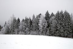 Winter trees with hoarfrost. Winter trees in Russian wood, cloudy day, December Stock Photo