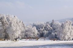 Winter trees holiday landscape Stock Images