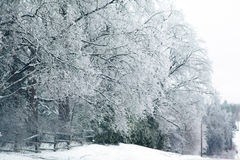 Winter trees in icing Royalty Free Stock Images