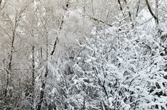 Winter trees with icy white branches in the park. stock images