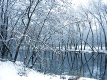 Winter trees on the lake Stock Image