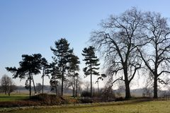 Winter trees landscape Royalty Free Stock Photo