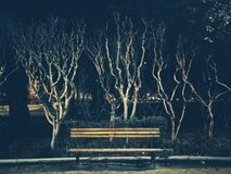 Winter trees. Without leaves in the dark cold night royalty free stock images