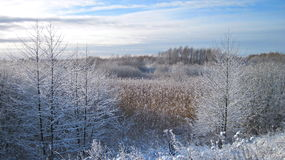 Winter trees , Lithuania Stock Photography