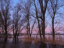 Winter trees , Lithuania Stock Photo