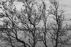 Winter Trees. Trees loosing its leaves on a cold winters day with the ocean behind Stock Image