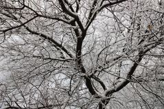 Winter trees in Lugansk royalty free stock photos