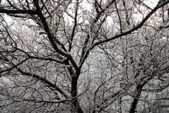 Winter trees in Lugansk royalty free stock images