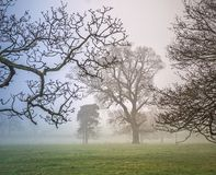 Winter trees in a misty parkland. Royalty Free Stock Photos