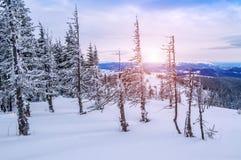 Winter,trees, mountain Royalty Free Stock Image
