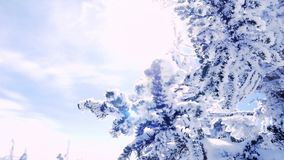 Winter trees in mountains covered with fresh snow in slow motion. 1920x1080 stock video