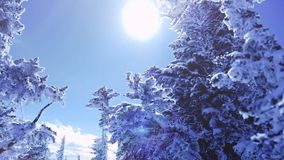 Winter trees in mountains covered with fresh snow in slow motion. 1920x1080 stock footage