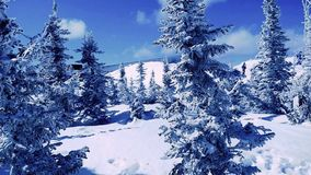 Winter trees in mountains covered with fresh snow in slow motion. 1920x1080 stock video footage