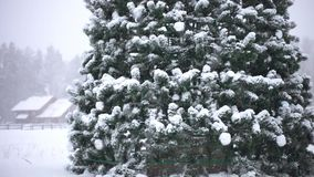Winter trees in mountains covered with fresh snow. During snowfall and Christmas tree with a star in the foreground. 1920x1080 stock video