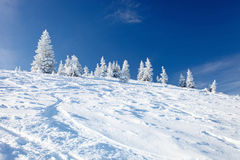 Winter trees in mountains covered with snow Royalty Free Stock Photography
