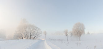 Winter trees near  covered with hoar at morning lit with sunligh Royalty Free Stock Image