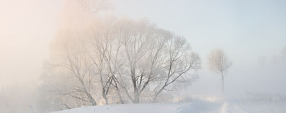 Winter trees covered with hoar at morning lit with sunlight Royalty Free Stock Images