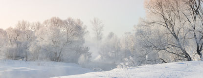 Winter trees near a river covered with hoar at morning lit with Stock Images
