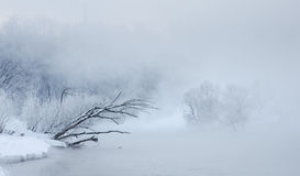 Winter trees near a river covered with hoar at morning Stock Images