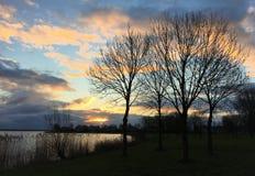 Winter trees next to Wolderwijd Zeewolde royalty free stock image