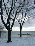 Winter Trees On Lakeshore Stock Photography