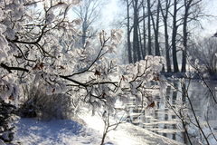 Winter, trees, outdoor, nature, river. Winter trees with ice and snow Stock Image