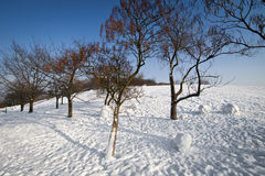 Winter trees in the park Royalty Free Stock Photo