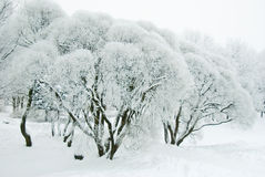 Winter trees. In the park Stock Image