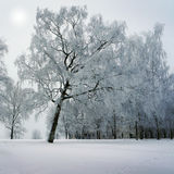 Winter trees in park Royalty Free Stock Images