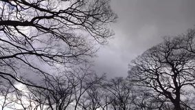 Winter trees at park in Osaka, Japan stock video