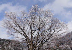 Winter trees at the park in Takayama, Japan Stock Photography