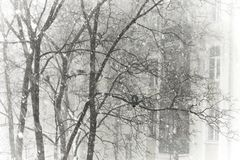 Winter, trees and pigeons Royalty Free Stock Photos