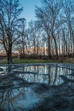 Winter Trees Reflecton 2. Bare trees are reflected in puddles in Kent, Washington royalty free stock image