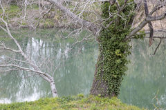 Winter Trees on River Bank in Provence. France Stock Photography