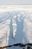 Winter trees shadow Stock Images