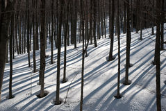 Winter trees with shadows Royalty Free Stock Images