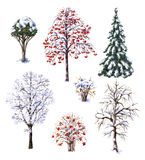 Winter Trees and Shrubs Royalty Free Stock Photography