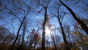 Winter Trees in Sky stock video footage