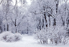 Winter trees with snow Stock Image