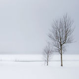 Winter Trees and Snow Stock Photography