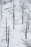 Winter trees in snow. At MT. emei Royalty Free Stock Images