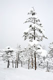 Winter trees in snow Royalty Free Stock Photos