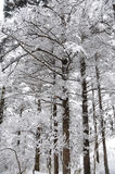 Winter trees in snow. At MT. emei Stock Photos