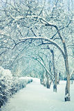 Winter trees in snow. Scenic winter trees and path covered in snow Royalty Free Stock Photo