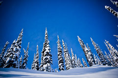 Winter trees snow 2. Ski hill in the winter with trees  in mountains. A winter getaway to Alberta, Canada Royalty Free Stock Images